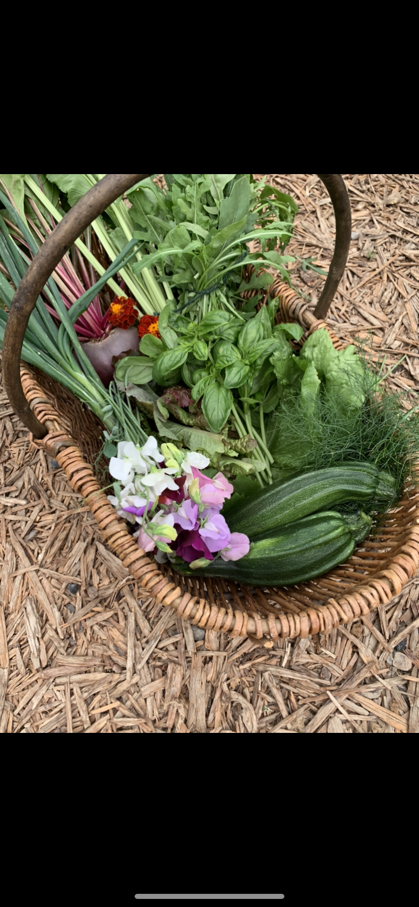 trug of produce
